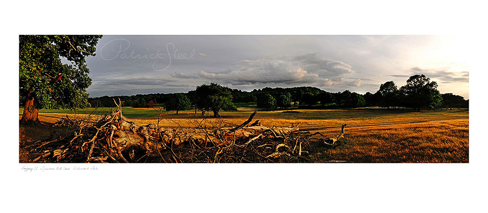 Richmond Park Landscapes by Patrick steel