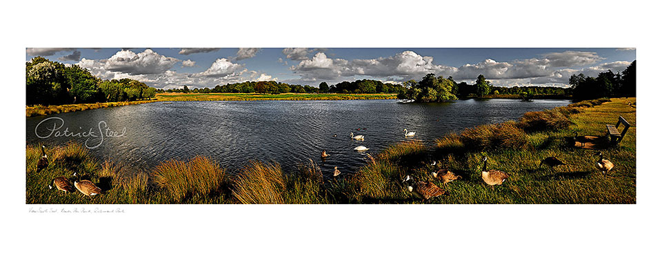 richmond park, pen ponds by Patrick Steel